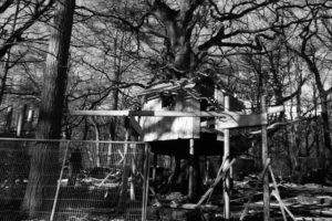The treehouse taking shape for family adventure play at Slieve Gullion, newry
