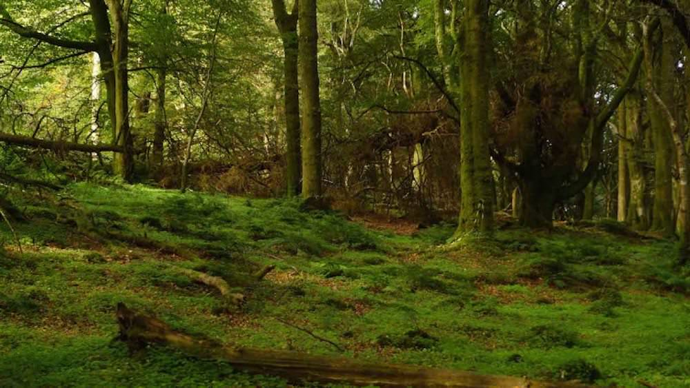 The amazing forest at slieve gullion