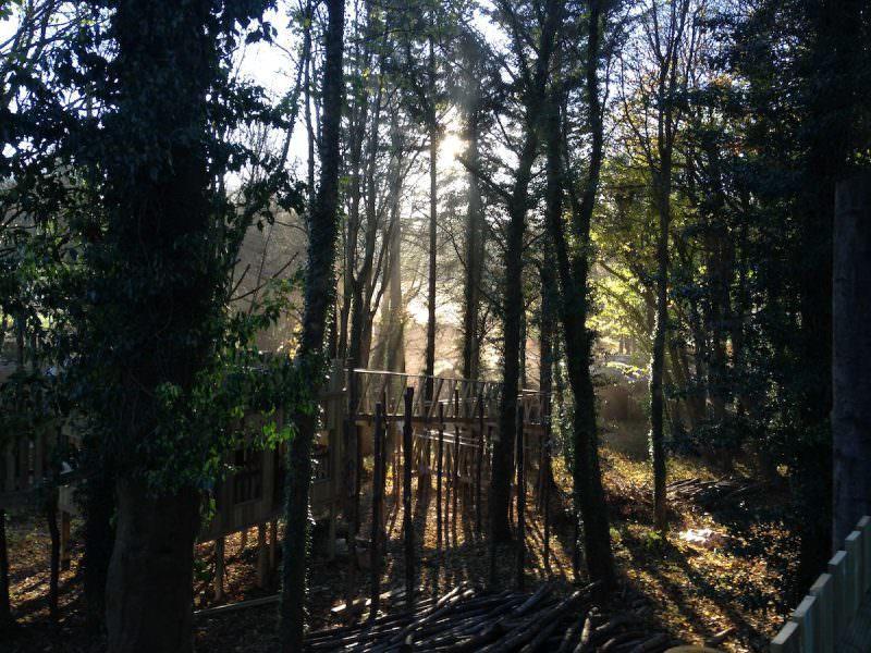 Gorgeous sun backlighting the Culzean Wild Woodland