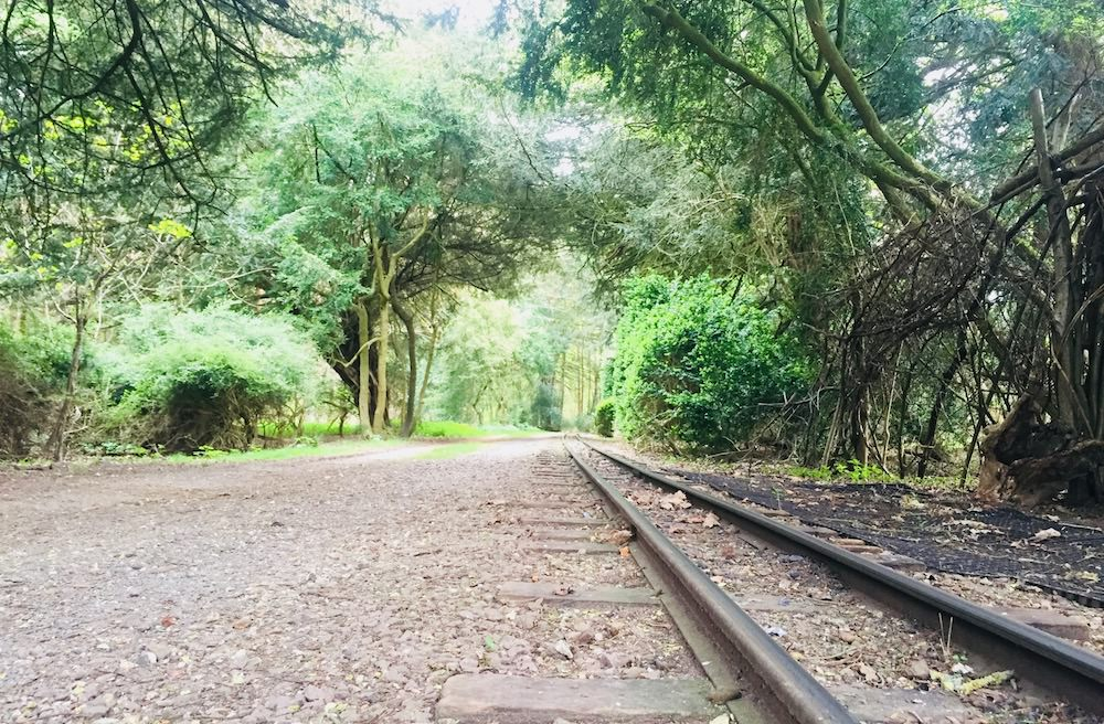View along the track heading into the woods at Audley End Miniature Railway