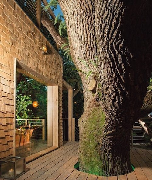 a tree grows through the deck outside some treehouse accommodation