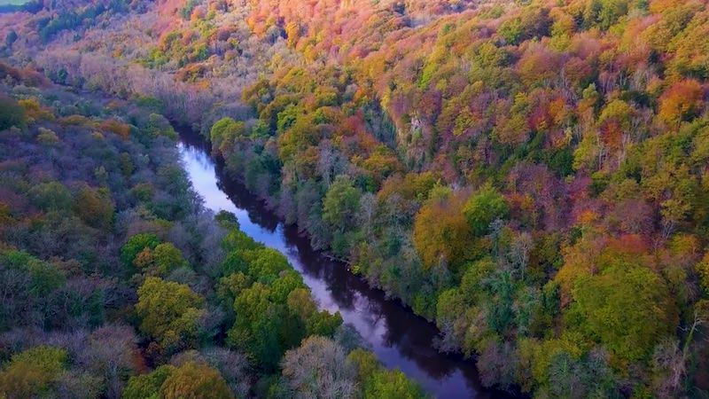 The stunning colours from the air of Lady Park Wood