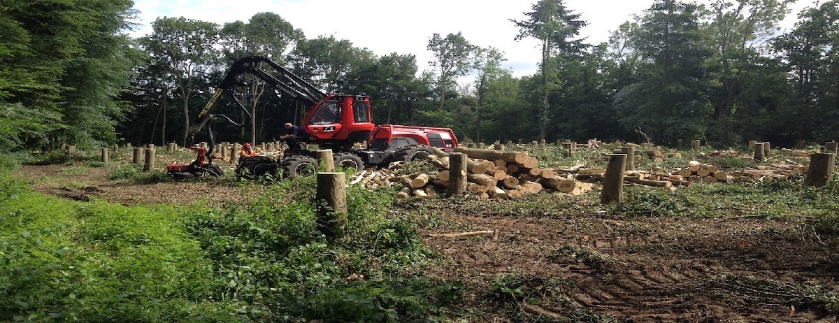 The trees are felled before being cut to size and being organised