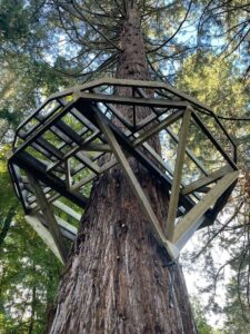 Framework in the tree