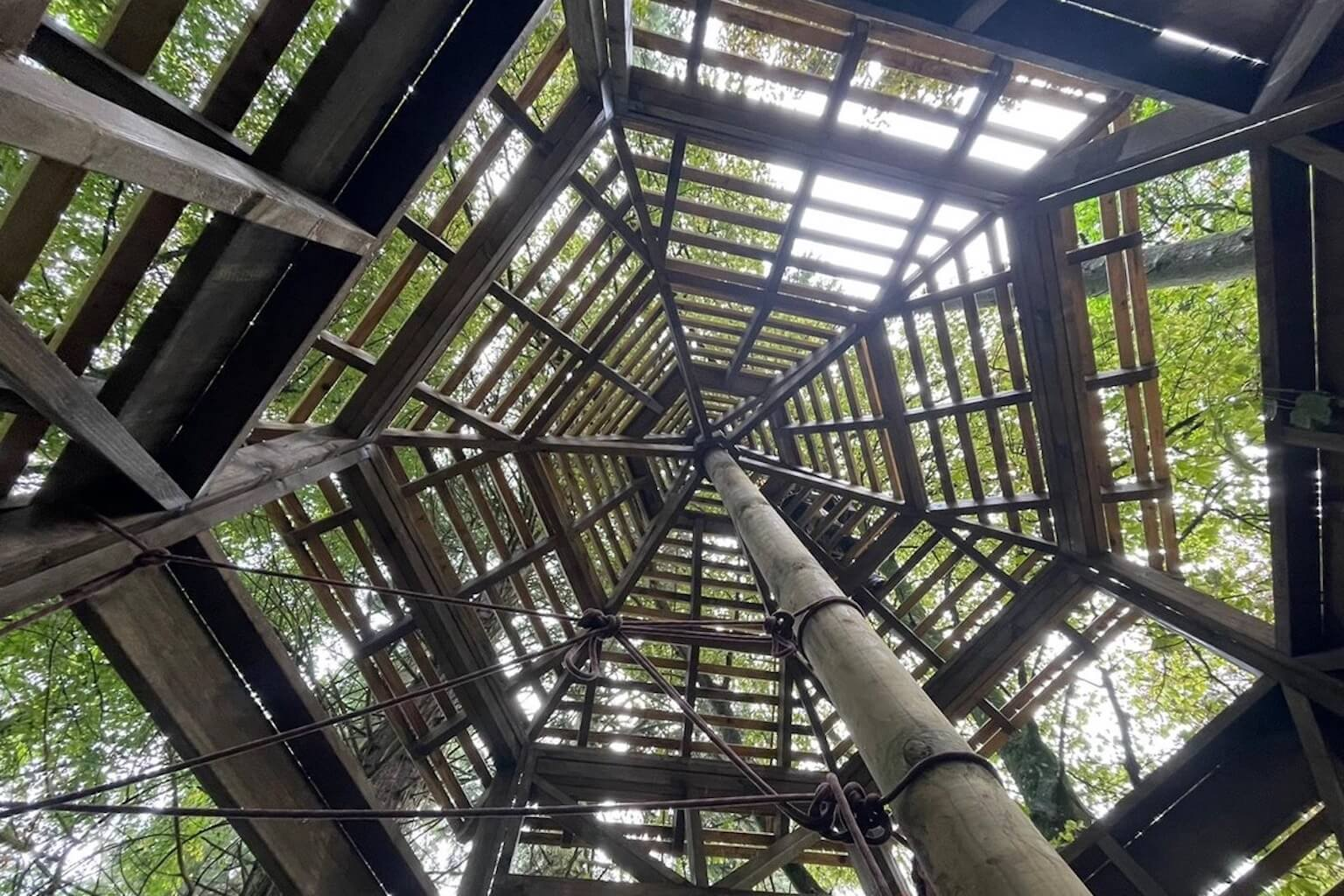Looking up through the framework 2