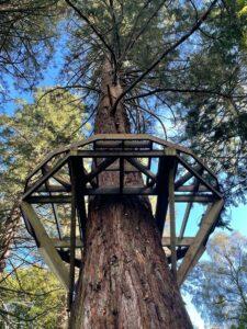 The frame takes the sape on a tree